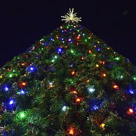 Sandi OReilly - Tall Christmas Tree Perspective 2