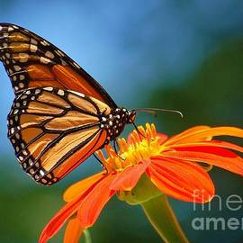 Taste Of Nectar by Joy Bradley