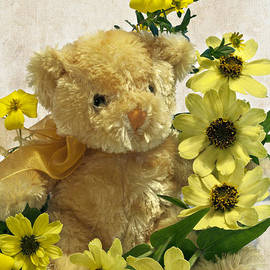 Sandra Foster - Teddy Bear - Yellow Toto Lemon Rudbeckia