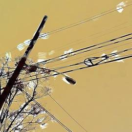 H James Hoff - Telephone pole with light