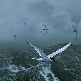 Schwartz - Terns over Stormy Seas