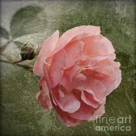 Textured Pink Rose by Liz  Alderdice