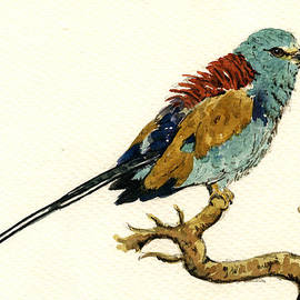 Juan  Bosco - The Abyssinian Roller Coracias abyssinicus