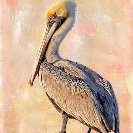 HH Photography of Florida - Birds - The Artful Pelican