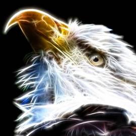 The Bald Eagle by Davandra Cribbie