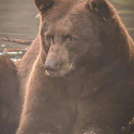 Mitch Shindelbower - The Bear Necessities