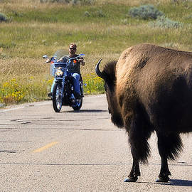 The Bison and the Biker by Ted Guhl