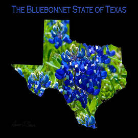 Robert J Sadler - The Bluebonnet State of Texas