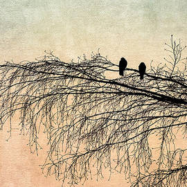 Alexander Senin - The Branch Of Reconciliation 2