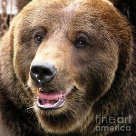 Ausra Huntington nee Paulauskaite - The Brown Bear In Close Up Square Format