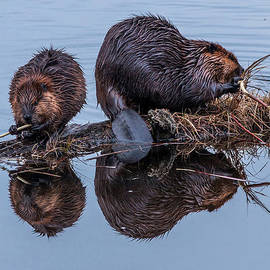The Busy Beavers by Steve Dunsford
