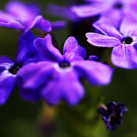 Music of the Heart - The Color Purple