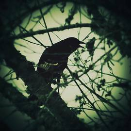 Teresa A Lang - The Crow