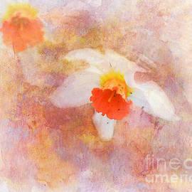 Jai Johnson - The Daffodil