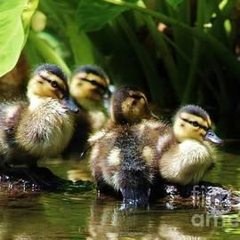 Craig Wood - The Duckling Gang
