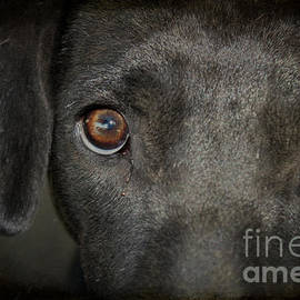 The Eyes of a Rescue Dog by Janice Pariza