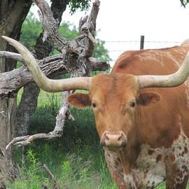 Shawn Hughes - The Eyes of Texas
