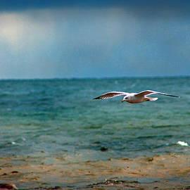 Rhonda Humphreys - The Flight