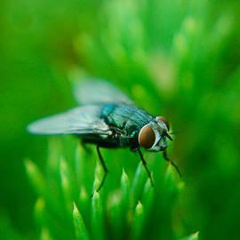 The Fly by Rhonda Barrett