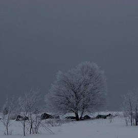 Francois Fournier - The Frosted Field