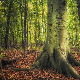 Scott Norris - The Giving Tree