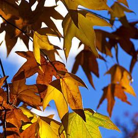 Saija  Lehtonen - The Golden Hues of Autumn