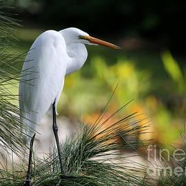 Sabrina L Ryan - The Great White Egret