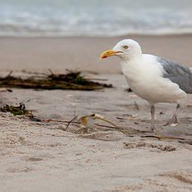 The Gull by Sara Hudock