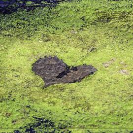 LeeAnn McLaneGoetz McLaneGoetzStudioLLCcom - The heart of the bog