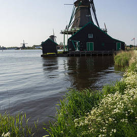 The Iconic Windmills of  Holland