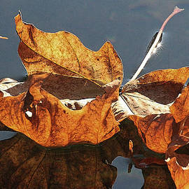 The Last Leaf by Bill Oliver