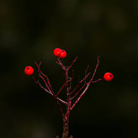 The Last Of Ashberries by Alexander Senin