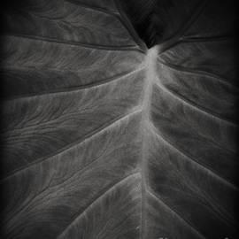 Edward Fielding - The Leaf