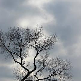 The Art Of Marilyn Ridoutt-Greene - The Lonely Tree