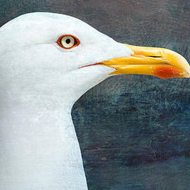 The majestic gull by Timothy Lens Attack