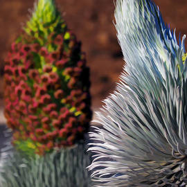 The Majestic Silversword by Ken Fields