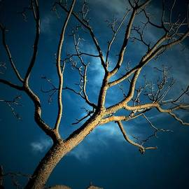 Donatella Muggianu - The mediator between earth and sky