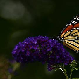 Wanda Brandon - The Monarch Rules