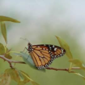 Rhonda Humphreys - The Monark