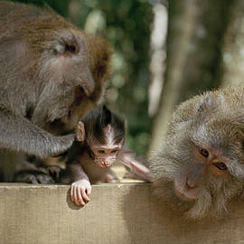 The Monkey Forest by Shaun Higson