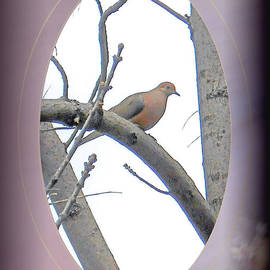 Patricia Keller - The Mourning Dove