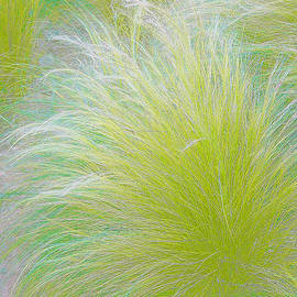 The Nature Of Grass   by Ben and Raisa Gertsberg