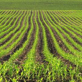 Francois Fournier - The New Corn Growths