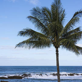 The Perfect Palm Tree - Sunset Beach Oahu Hawaii by Brian Harig