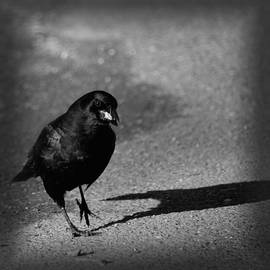 Maria Urso  - The Raven II