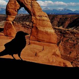Sarah Pemberton - The Raven