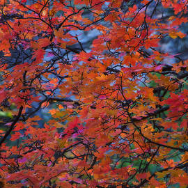 Saija  Lehtonen - The Reds of Autumn