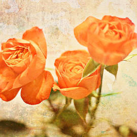 The Restful Rose by Robin Koza