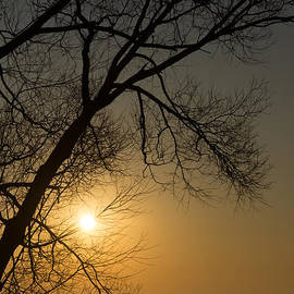 Georgia Mizuleva - The Rising Sun and the Tree