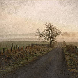 The Road Not Taken by Liz  Alderdice